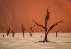 Trees in the Deadvlei of Namibia
