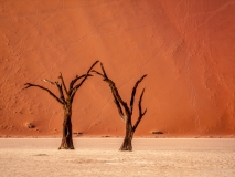 Isolated treas in the deadvlei of Namibia