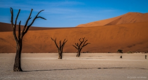 Trees on a row at the Deadvlei of Namibia