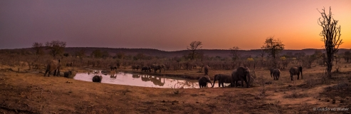 Elephants near waterhole, South-Africa