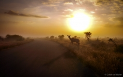 Kudu during sunrise, South-Africa